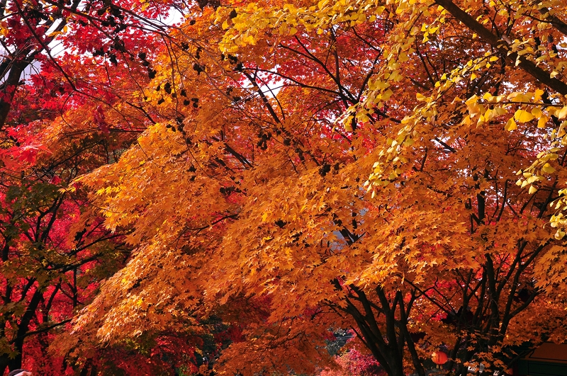 Fall Colors at Buseoksa Temple, Korea