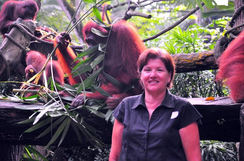 Breakfast with the Orangutans