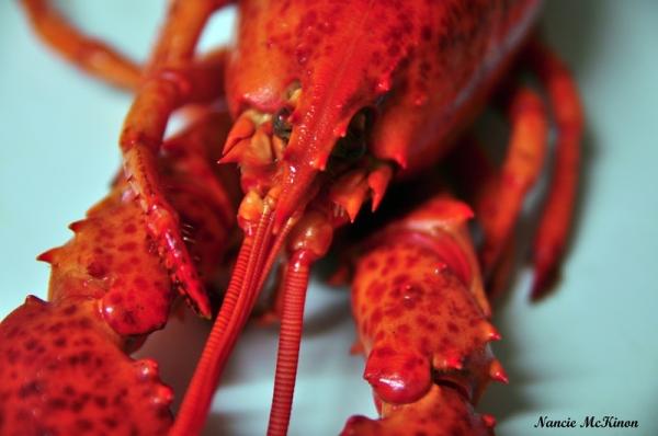 m_lobsterheaddsc_2783