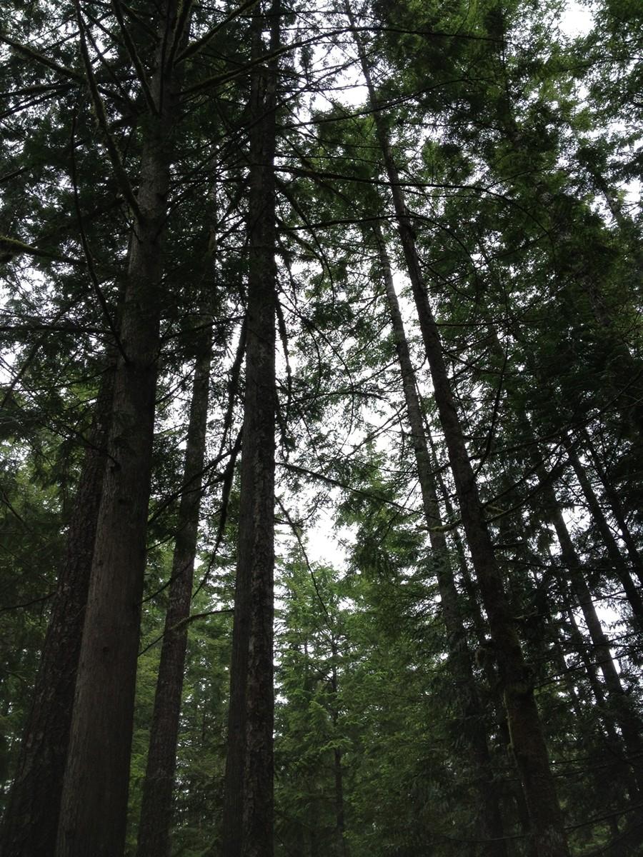 m_trees