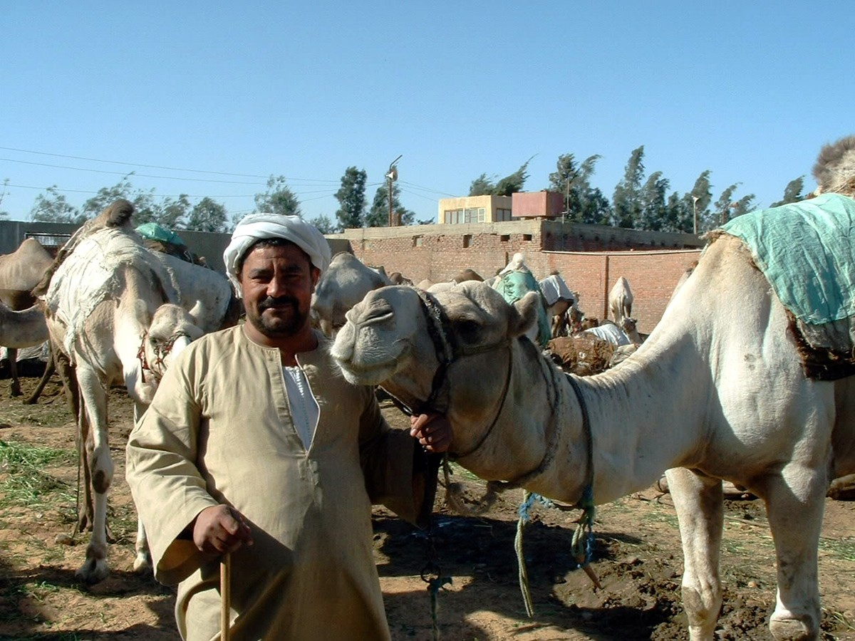 Egypt's Barqash Camel Market
