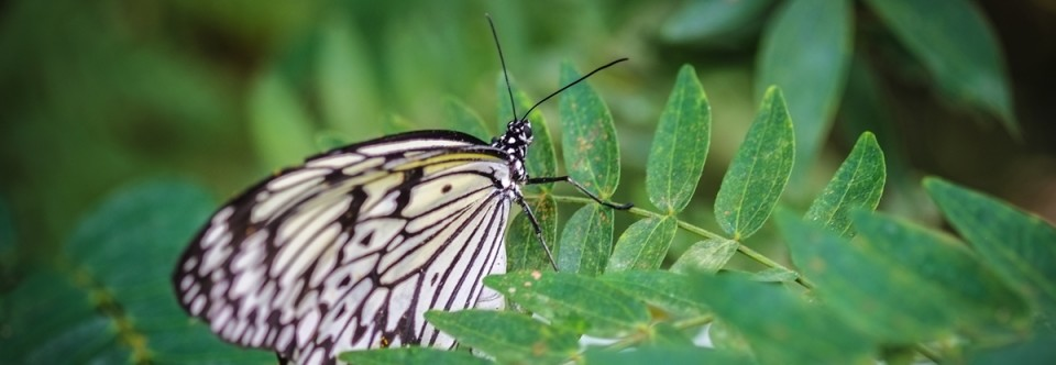 Penang's Butterfly Farm for Travel Photo Thursday