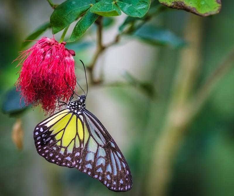 Butterfly Farm, Penang
