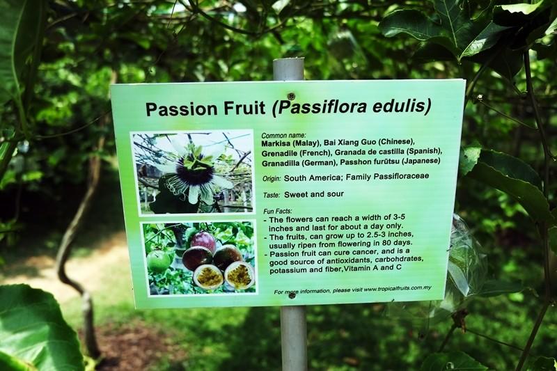 Tropical Fruit Farm, Penang